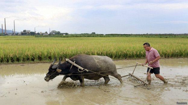 En algunos países asiáticos se puede dar un aumento del precio de los alimentos.
