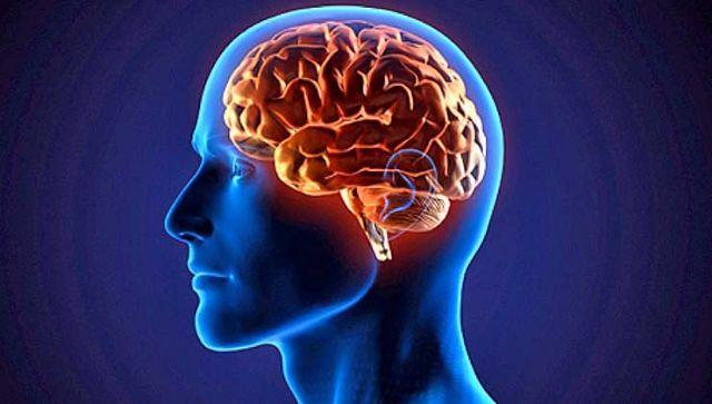 Alzheimer, tumores cerebrales, esquizofrenia, infartos cerebrales, epilepsia, demencia o varios tipos de ataxias son algunas de las enfermedades que afectan al sistema nervioso central y que para tratarlas es necesario que los fármacos hagan diana en el cerebro