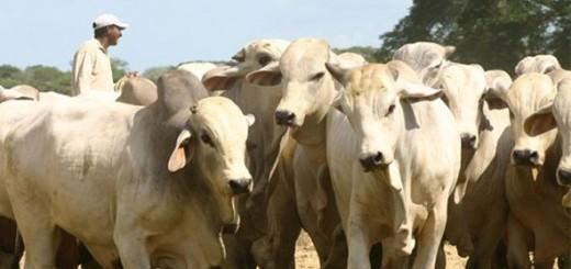 El 'cartel de la carne', la organización que comercializa con ganado venezolano | Imagen referencial