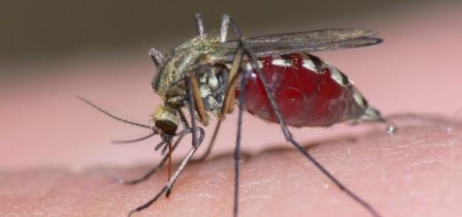 Embarazadas deben evitar el virus Zika