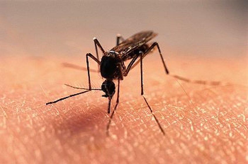OMS pide mantener fuerte vigilancia ante zika, incluso en países sin casos | Foto referencial