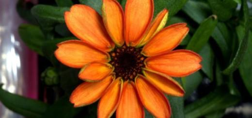 Primera flor en el espacio
