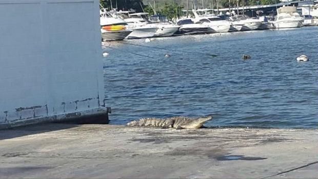 ONSA alerta presencia de cocodrilos en Higuerote, Carenero y Río Chico