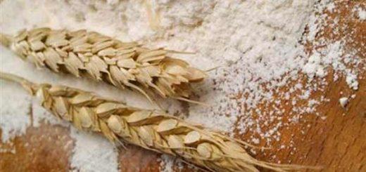Harina de trigo panadero de Monaca aumenta su precio / Imagen de referencia