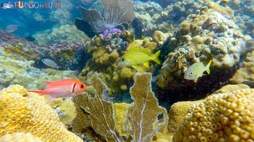 Corales en Isla La Blanquilla | Foto: Furgo en Ruta