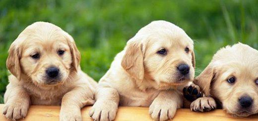 Cachorros | Foto referencial