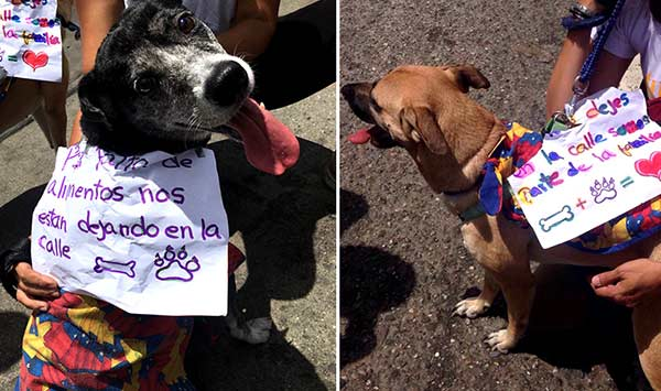 mascotas-en-protesta-toma-caracas-3