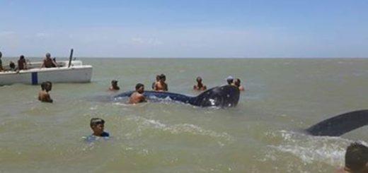 Muere Tiburón en costas de Falcón / foto: NotiFalcon