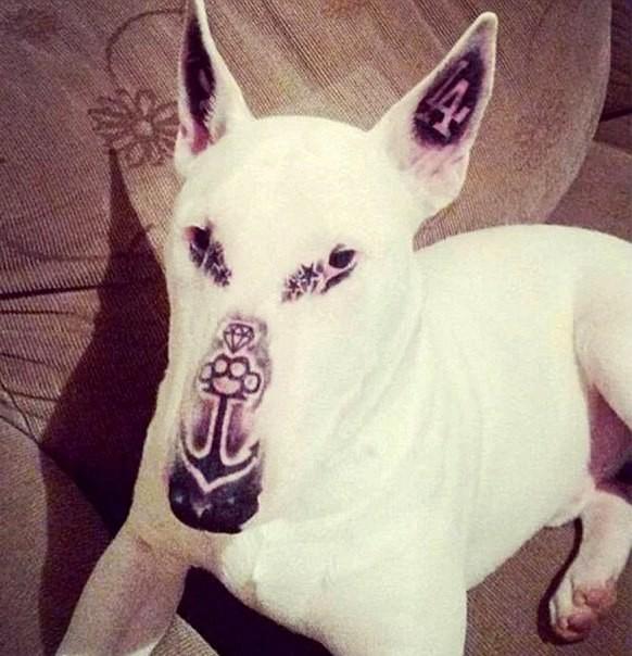 perro-tatuado