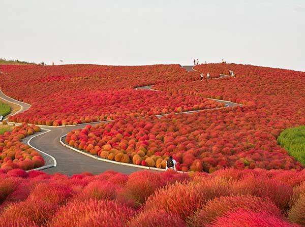 Parque Hitachi, Japón | Foto: Agencias