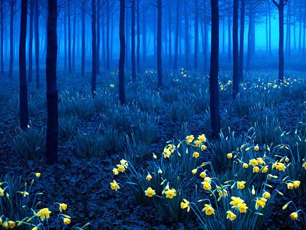La selva negra, Alemania | Foto: Agencias