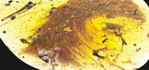 El hallazgo de la cola de dinosaurio fue hecho en Myitkina, en Birmania, una región productora de ámbar. | Foto: CURRENT BIOLOGY