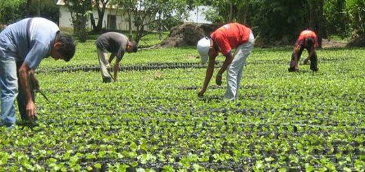 Producción agrícola va en descenso desde 2006  Foto referencial