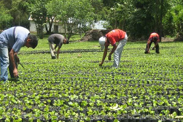 Producción agrícola va en descenso desde 2006 |Foto referencial