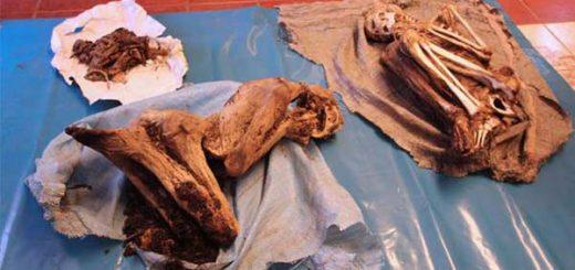 Dos momias prehispánicas aparecieron de la nada en un paraje solitario en Perú   Foto: Facebook / Ministerio de Cultura Cusco