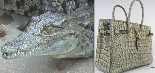 La piel de cocodrillo es usaba para crear carteras y otros accesorios | Fotomontaje: Notitotal