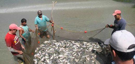 Venezuela exportará productos pesqueros a El Salvador | Cortesía Inopesca