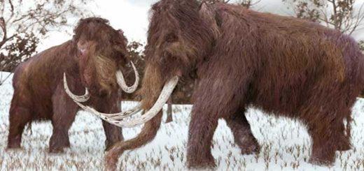 El Mamut desapareció debido al cambio climático, aseguran los expertos