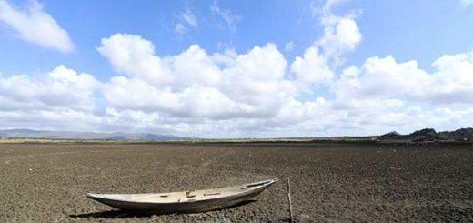 El embalse más antiguo de Brasil se convirtió en un cementerio de tortugas | Foto: AFP