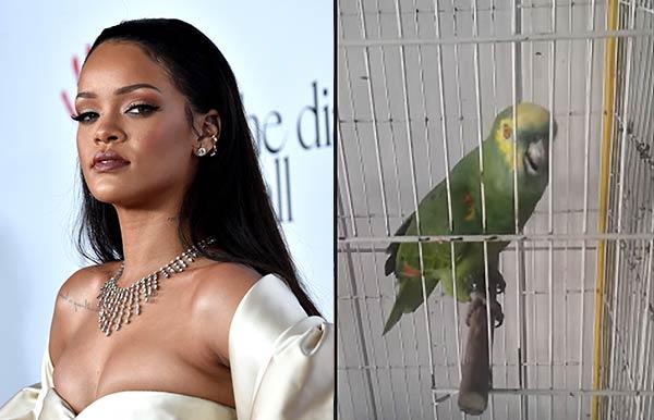 Loro imita a Rihanna  Composición Notitotal