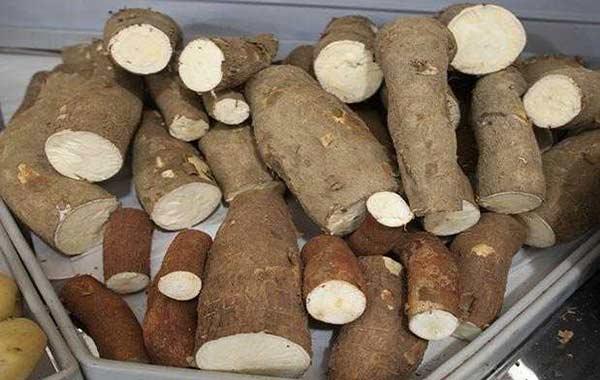 Venezolanos siguen intoxicándose por comer Yuca amarga |Foto referencial