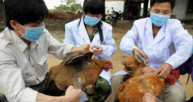 Gripe Aviar sigue mutando |Foto: Omicrono