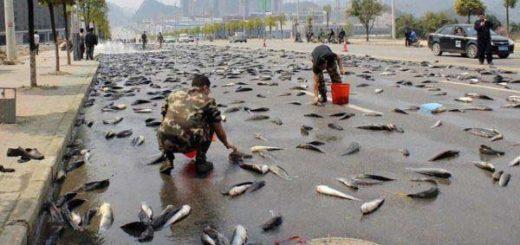 La lluvia de peces es un raro fenómeno natural |Foto: Confirmado