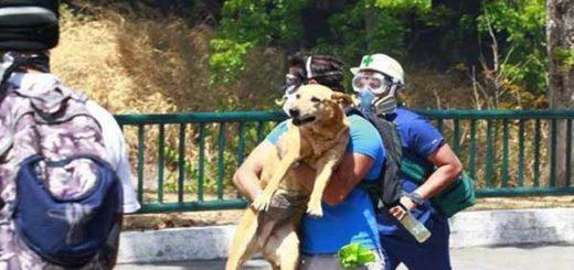 Medidas para proteger a las mascotas de las bombas lacrimógenas | Foto: Twitter