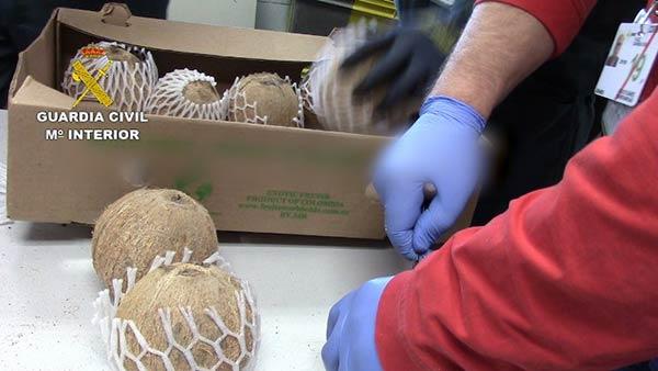 Los detenidos ingresaban cocos rellenos de cocaína a España |Foto: AFP