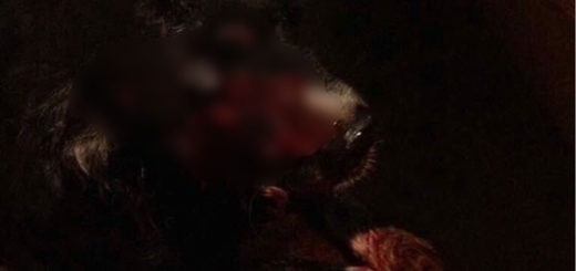Sebin disparó a quemarropa en el rostro de un perrito durante allanamiento en Los Verdes | Foto: vía @AlbertoRT51