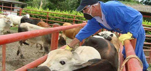 Fiebre aftosa afecta al ganado  | Foto referencial