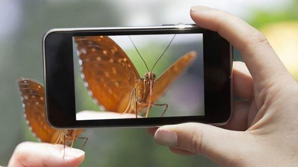 Inaturalist es una aplicación útil para los amantes de la naturaleza |Foto: Getty Images