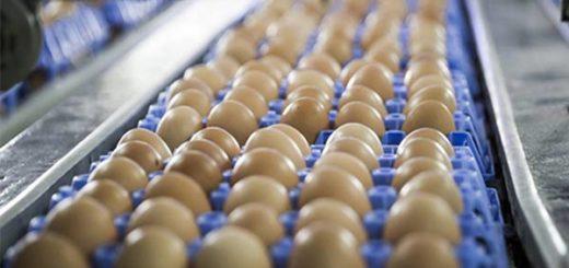Comisión Europea convoca a países afectados por huevos contaminados