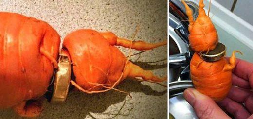 Anillo en zanahoria | Fotos: BBC