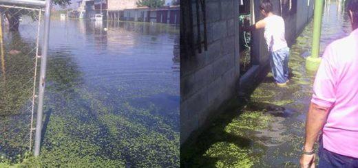 En las aguas se puede ver la bora o verdin |Foto: Twitter