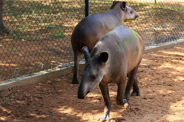 Zoológico de Zulia |Foto: Reuters
