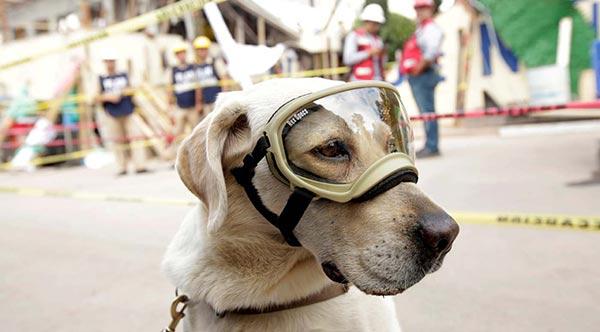 Frida, la perra heroína | Foto: Reuters
