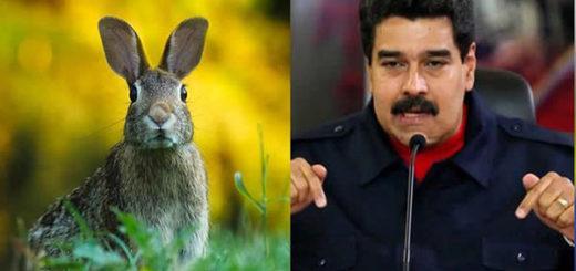 Nicolás Maduro anunció el plan conejo este martes |F Crédito: Colombia.com