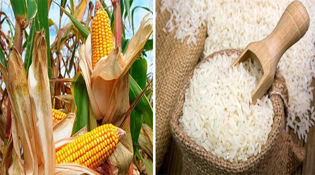 Fedeagro espera publicación de los nuevos precios del arroz y el maíz   Referencial