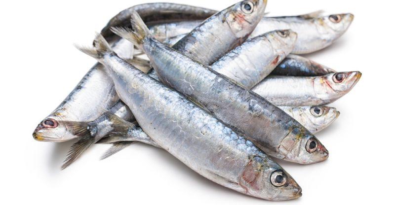 Sardines-800x416