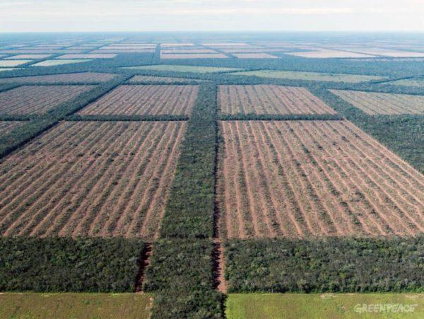 hectáreas